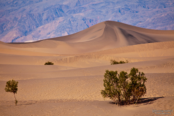 Death Valley National Park Sand Dunes